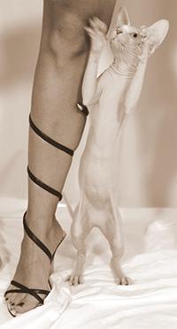 Legs with Sphynx Cat
