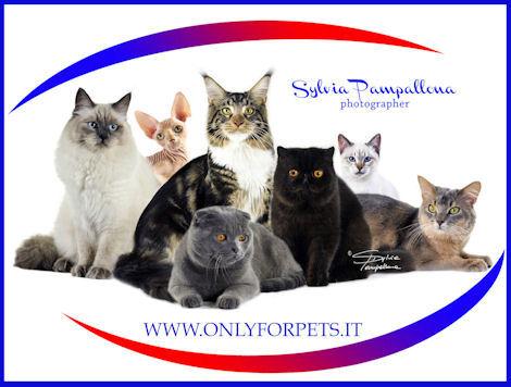 Esposizione Internazionale felina Giubiasco (CH) 22,23-11-2014