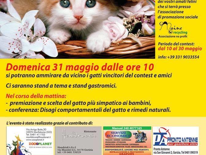 Il gatto protagonista Gorizia (GO) 31.05.2015